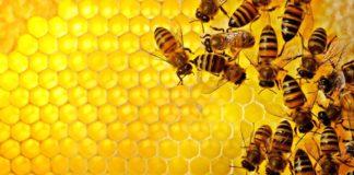 Afla de ce propolisul este considerat cel mai puternic medicament de la natura